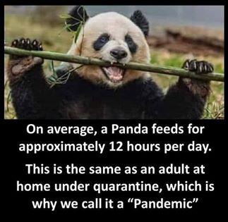 funny coronavirus meme, panda coronavirus meme, animal coronavirus meme, fat coronavirus meme