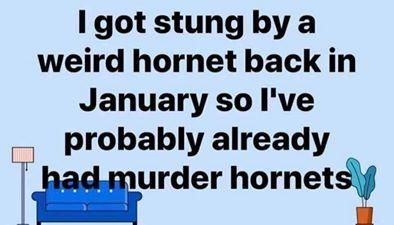 funny coronavirus meme, murder hornet coronavirus meme