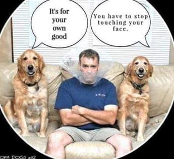 funny coronavirus meme, dog coronavirus meme, pets coronavirus meme