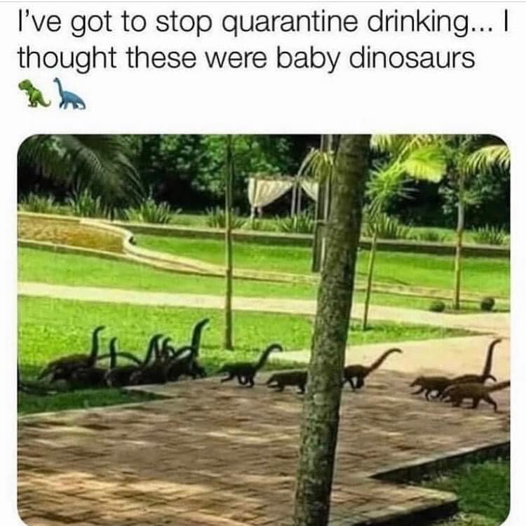 funny coronavirus meme, drinking coronavirus meme, dinosaur coronavirus meme, lemur coronavirus meme, animal coronavirus meme