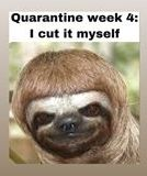 funny coronavirus meme, animal coronavirus meme, haircut coronavirus meme, sloth coronavirus meme