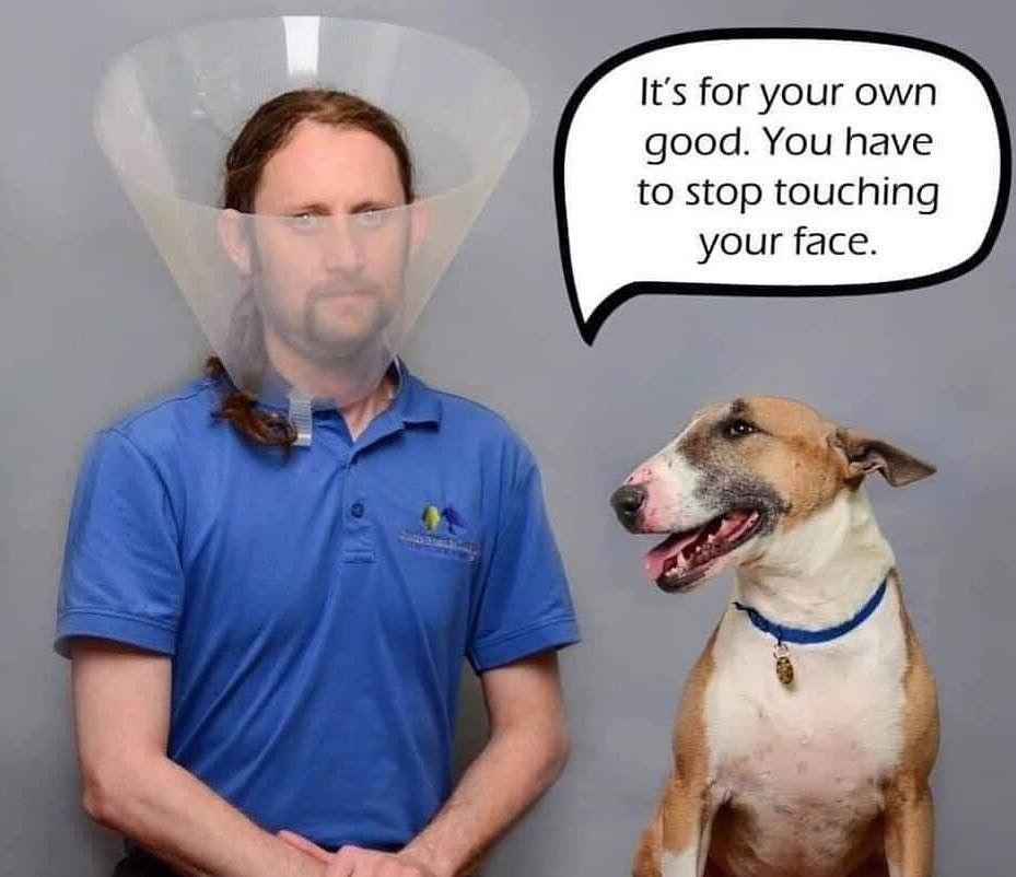 funny dog coronavirus meme, funny animal coronavirus meme, dog cone coronavirus meme